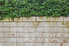 White brick wall with Green leafs Stock Photography