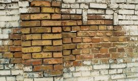 The white brick wall is real with rose shades from rain to red brick royalty free stock photo