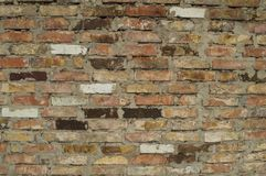 The white brick wall is real with rose shades from rain to red brick stock photography