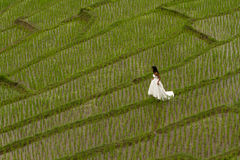 White bridal dress with beautiful romantic young woman in terraced paddy field Stock Photo