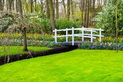 White bridge and colorful flowers blossom in dutch spring garden Keukenhof, Holland Royalty Free Stock Photography