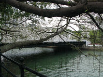 White Bridge in Singapore - Trees in the foreground Royalty Free Stock Photography