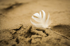 White bright feather pressed into the sand on the beach. Stock Photo