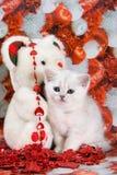 White british kitten. In decoration stock photo