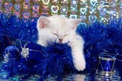 White british kitten. In decoration stock photography
