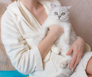 White British shorthair cat in the hands of a woman in a bathrobe. White British shorthair cat in the hands of a woman in bathrobe Royalty Free Stock Images