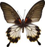 White and brown butterfly illustration Stock Images