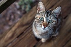 White and brown cat looking at you. Close up portrait Stock Photo