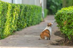White brown cat sit on ground look at small green tree in garden Stock Photos