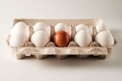 White and brown chicken eggs. Royalty Free Stock Photos