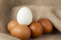 White and brown chicken eggs Royalty Free Stock Photography