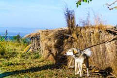 Dog guarding a straw hut in the mountains Stock Photography