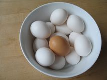 White and brown eggs Stock Photography