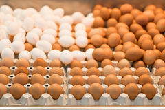 White and brown eggs in a market. Stock Photo
