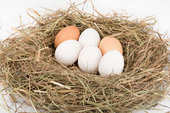 White and brown eggs in nest. Chicken eggs in nest of straw. White and brown. On white background royalty free stock photography