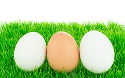 White and brown fresh eggs Royalty Free Stock Photo