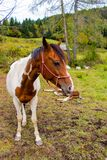 White brown horse behind her young foal resting stock images
