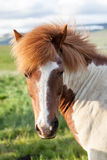 White and Brown Horse on Green Grass Field during Daytime Royalty Free Stock Photos