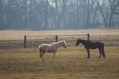 White and brown horse in pasture Royalty Free Stock Photos