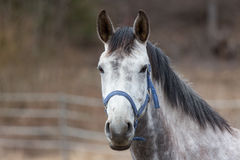 White and brown horse Royalty Free Stock Photo