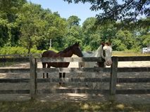 White and brown horse and wood fence Stock Image