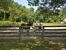 White and brown horse and wood fence Royalty Free Stock Photos