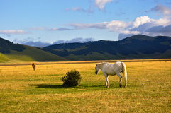 White and brown horses in the Apennines landscapes Stock Photos