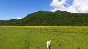 White and brown horses eating fresh green grass in valley, farming aerial view. Stock footage stock video footage