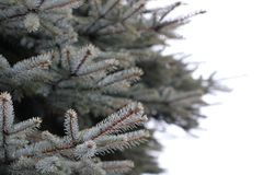White and Brown Pine Tree Selected Focus Royalty Free Stock Photos