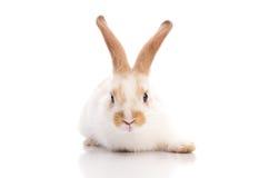 White and brown rabbit Stock Photo