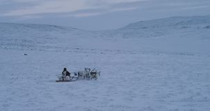 White and brown reindeers running fast in the middle of field in Arctic with a snow man wearing traditional clothes from. Fur he is on a sleigh. 4k stock footage