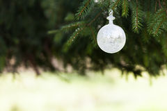 White buble. Pine tree and white buble Stock Photography