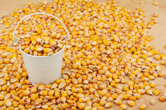 White bucket with corn on the wooden floor Stock Photos