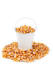 White bucket full of corn, stands on a heap corn Stock Image