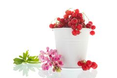 White bucket red currents royalty free stock photos