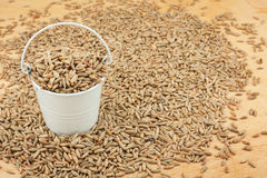 White bucket with rye grain on the wooden floor Stock Photos