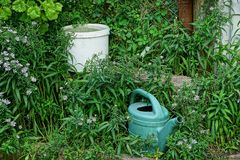 White bucket with water and watering can in green vegetation. Garden tools with water for irrigation in green grass stock images
