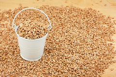 White bucket of wheat on the wooden floor Stock Images