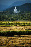 White buddha on the hill and havested field rice Royalty Free Stock Images