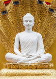 White Buddha image statue Royalty Free Stock Photos