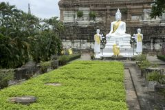 White Buddha in Wat Yai Chai Mong Kon. Stock Images
