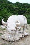 White Buffalo Royalty Free Stock Photos