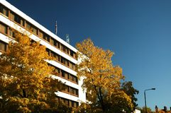 White building. Autumn yellow trees and white building in London royalty free stock photography