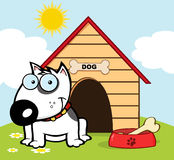 White bull terrier sitting by a dish with a bone. Smiling bull terrier with a bone in his dish outside his dog house Stock Images