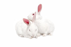White bunnies on white. White bunnies isolated on white for easter Royalty Free Stock Image