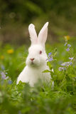 White bunny. And blue flowers stock image