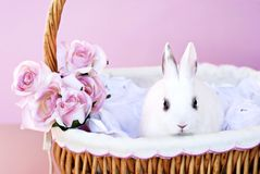 White Bunny in Basket Stock Image