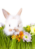 White bunny  in green grass with flowers and easte Royalty Free Stock Photo