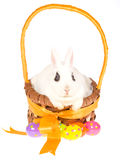 White bunny inside easter basket Royalty Free Stock Image