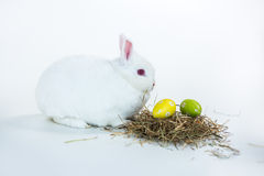 White bunny beside nest of easter eggs Stock Images